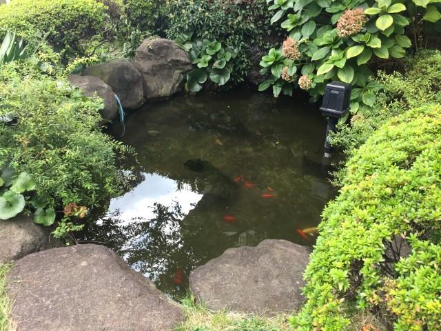 中野リハイム 池