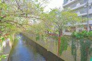 中目黒 目黒川 (3)