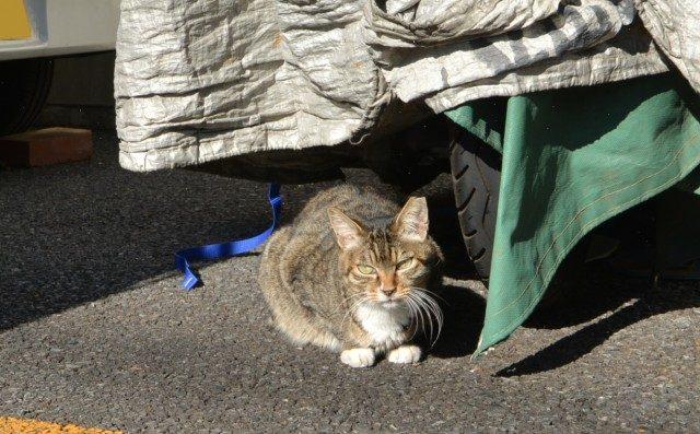 東大島 近所のネコ