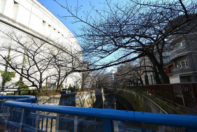 池尻大橋駅周辺 目黒川