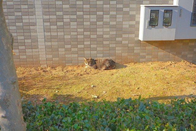 ラインズマンション根岸東 裏のネコ