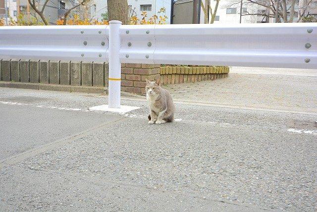 亀戸駅南側