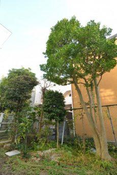 二子玉川ロイヤルマンション 専用庭